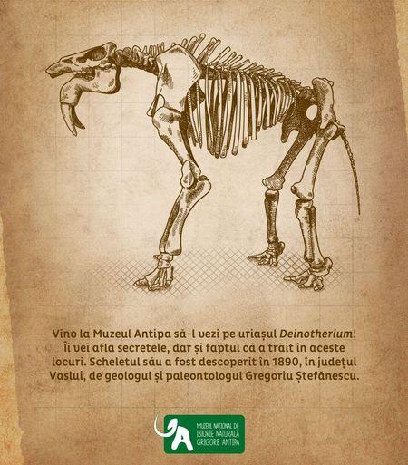 Cel mai mare mamifer din lume, disparut de 2 milioane de ani si descoperit in Romania, in expozitie aniversara la Antipa
