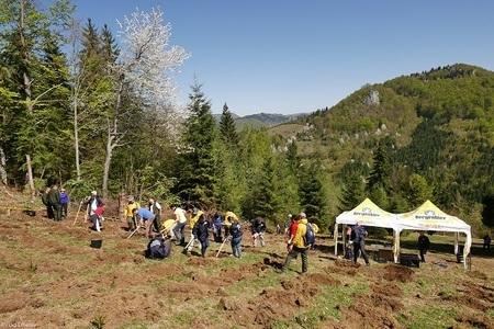 Te racoresti si reimpaduresti cu Bergenbier. Peste 200 de voluntari au inceput plantarea a 50.000 de brazi