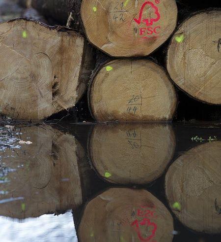 Masuri impotriva comertului ilegal cu lemn. Schweighofer a ramas fara certificarea FSC