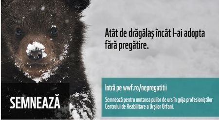 Ursii orfani pot creste mari. Campanie de strangere de fonduri pentru singurul orfelinat din Europa